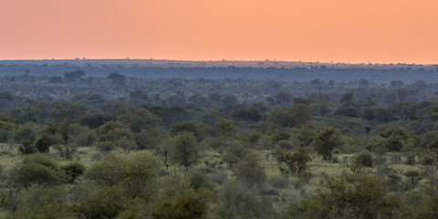 African Savanna plain overview at sunset