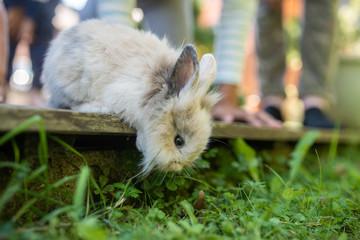 Cute little pet rabbit peeking from wooden terrace © Gajus