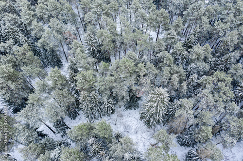aerial view of the snow-covered trees in winter forest after snowfall