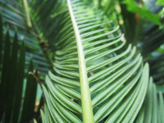 Leaves,  Foliage and Green Nature