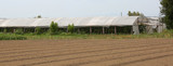 greenhouse for the cultivation of vegetables also during the col