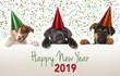 Leinwanddruck Bild - Happy new year puppies 2019