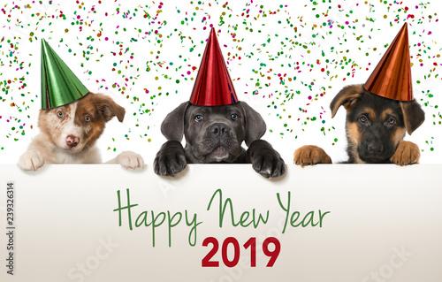 Leinwanddruck Bild Happy new year puppies 2019