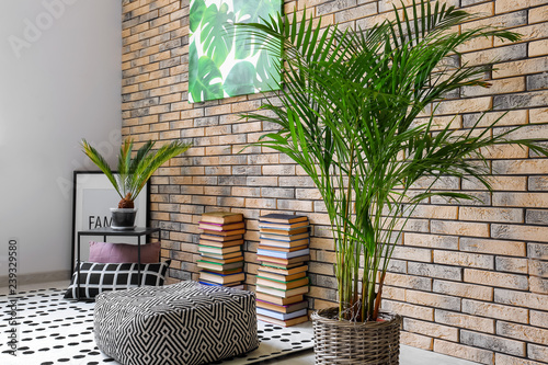 Leinwanddruck Bild Decorative Areca palm in interior of room