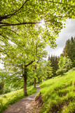 Path  in the Spring - Allgauer Alps - Bavaria – Germany