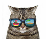 The cool cat wears sunglasses. There is  funny reflection in them. White background.