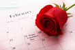 Red rose and calendar on february
