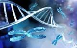 Chromosome, DNA helix, RNA, 3d rendering  - 239396522