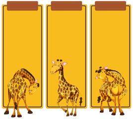 Different post of giraffe on banner © blueringmedia