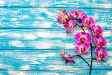 A branch of purple orchids on a blue wooden background  © licvin