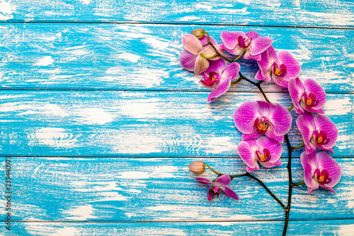A branch of purple orchids on a blue wooden background  - 239440973
