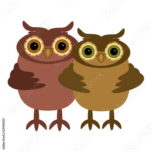 pair of owls on white background