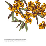 Background with hand drawn sea buckthorn branches - 239452379
