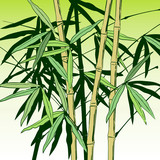 Green bamboo stems with leaves on white. Vector illustration © Raman Maisei