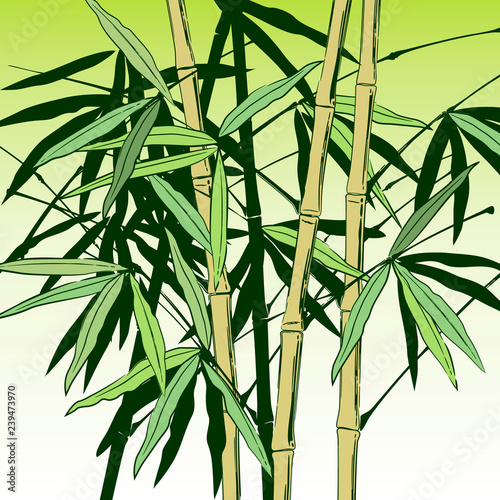Green bamboo stems with leaves on white. Vector illustration