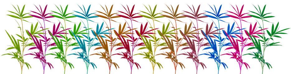 frise bambous couleurs, fond blanc  © Unclesam