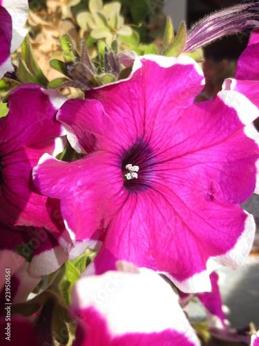 fotografias de plantas varias  - 239506561
