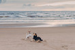 Outdoor shot of two dogs have struggle on sandy beach near sea during summer day. Horizontal view. Animals and nature concept