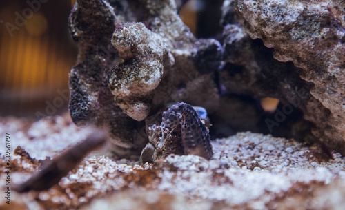 Seahorses at fish tank - 239561797