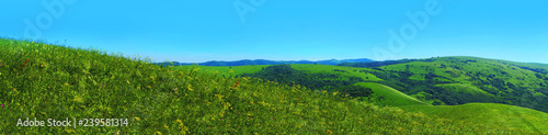 Panorama summer flower meadow in the mountains, tourism. Beautiful view landscape. Fresh green rural meadows on a sunny day with blue sky - 239581314
