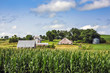 Iowa countryside background, focus on corn in foreground
