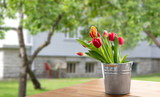 spring and gardening concept - red tulip flowers in tin bucket on wooden table over summer garden background © Syda Productions