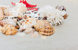 beach summer background – seashells and sea stars on the sand, copy space for text - 239648598