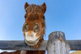 funny face horse portrait