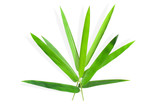 Bamboo leaves on white background © POOKAOSTOCK