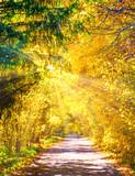 golden autumn alley arch