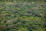 Aerial view of rain forest in Ethiopia.