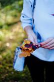Girl holding autumn leaves
