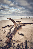 Beach after a storm with stump and wood