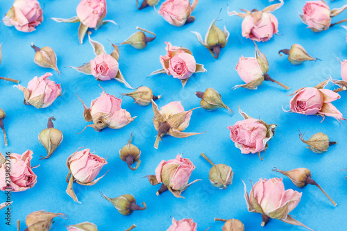 Background made from different rose blossoms on the blue base