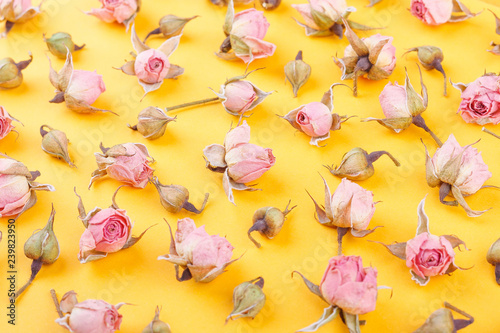 Background made from different rose blossoms on the orange base