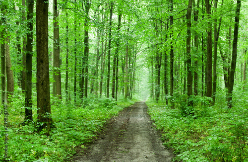 green forest - 239824774