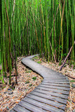 Bamboo Forest along Pipiwai Trail in Maui which can be found near the Road to Hana © paulacobleigh