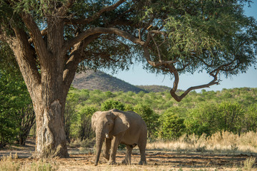 Elephant at Hobatere Reserve, Namibia