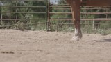 Horse running in stable - 239884528