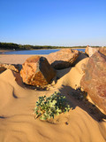 Rochers et végétaux sur une plage © JC DRAPIER