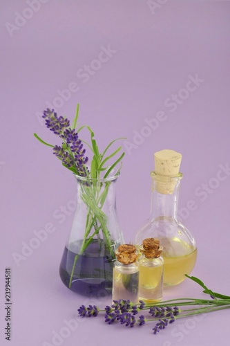 lavender oil set in  bottles and lavender flowers in laboratory flask on a bright lilac background - 239944581