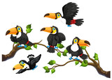 Toucan on tree branch - 239950317