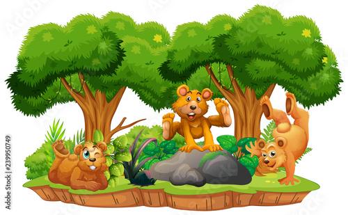 Bear on isolated jungle island