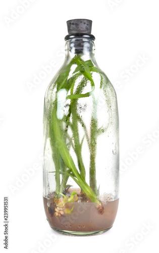 orchid in bottle
