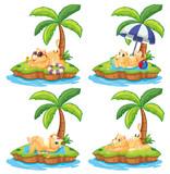 Set of lazy cat on island