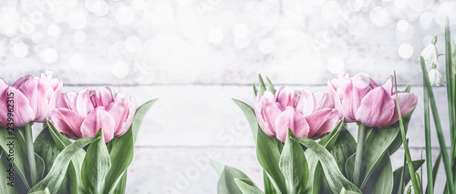 Pink tulips at white background with bokeh, front view,frame. Spring flowers. Tulips bunch, banner or template with copy space