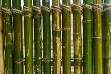 Green bamboo fence background © somchaip