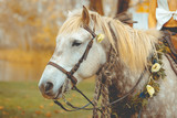 cheval de marié