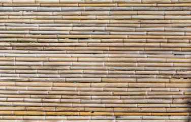 Fundo com bambu © JCLobo
