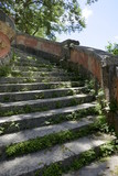 Jungle Stairs